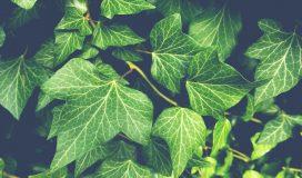 fototapeta zielona